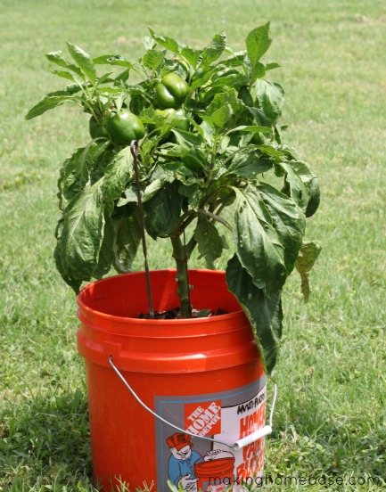 container gardening making home base