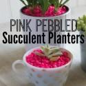 Pink Pebbled Succulent Planters