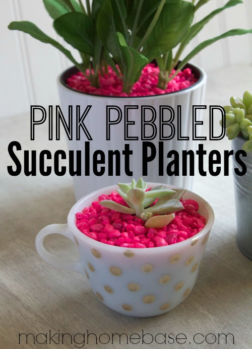 Succulent Planters with Neon Pink Pebbles