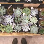 Adorable Succulents, The Perfect Garden Center, a New Neighborhood Hardware Store