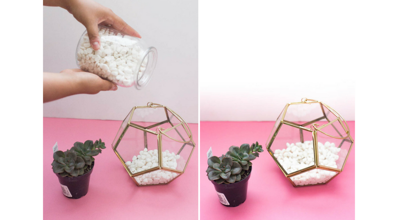 How to create a DIY succulent terrarium