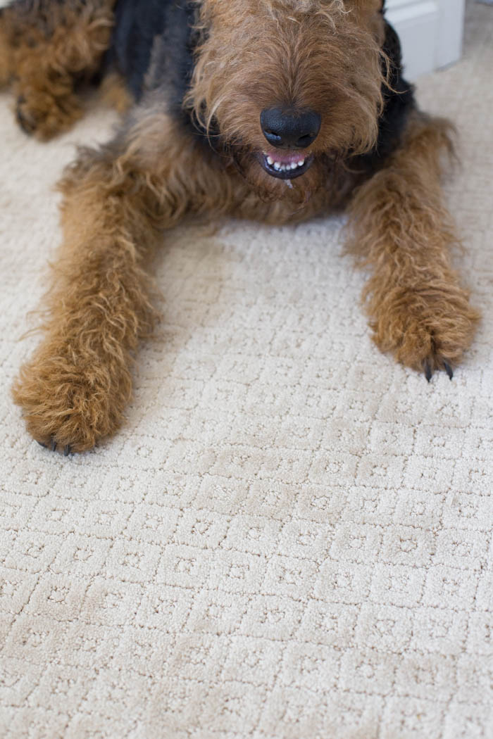 The Best Carpet for Pets The Home Depot PetProof Carpet